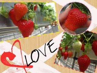 itigo-love.jpeg